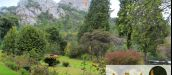 PINE TREE INN, NYANGA